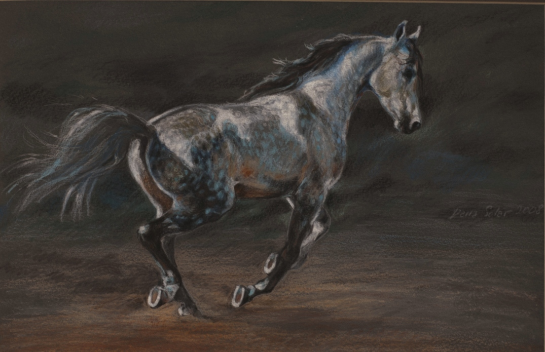 Arabian Stalion aquarel pencils on paper Daria Solar