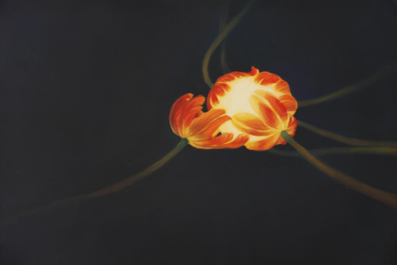 tuliświatły vol. 1 33x46 daria solar
